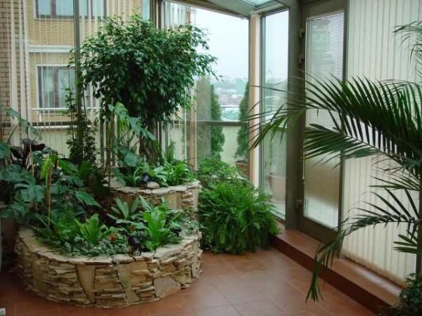 Зимний сад своими руками в квартире фото